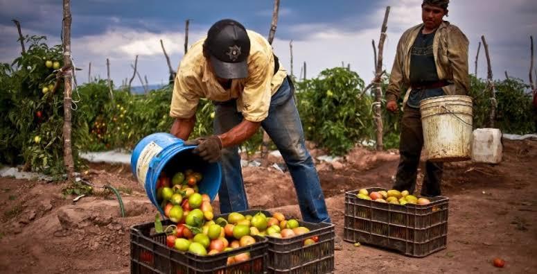 Gobierna un ambiente de incertidumbre en la producción y abastecimiento de alimentos